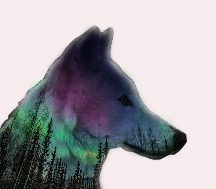 wolf double exposure